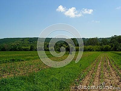 Landscape....(1)