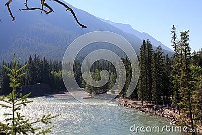 Landscape in Alberta