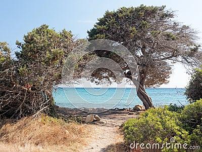 Landscape of Bidda Rosa beach Sardinia Italy