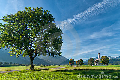 Landscape with big tree