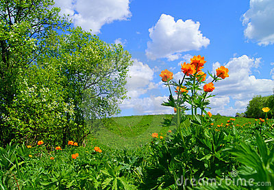 Landscape with bright flowers