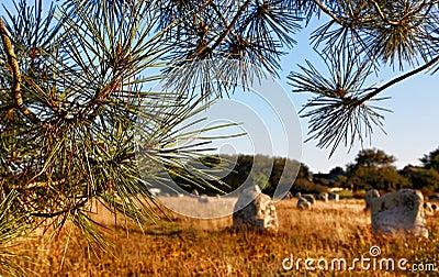 Landscape in Carnac