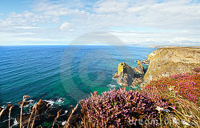 Landscape Cornwall sea cliffs heather