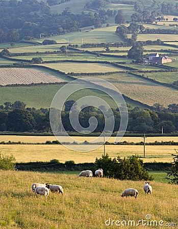 Landscape countryside hills