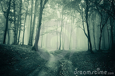 Landscape from a dark forest with fog