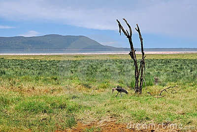 Landscape with dry plant and marabou stork