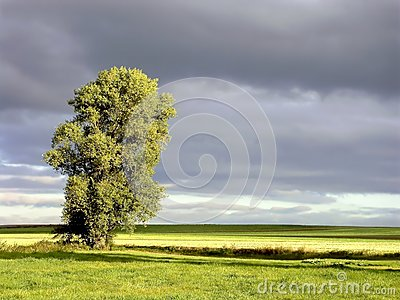 Landscape of early autumn tree at sunrise