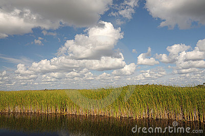 Landscape in the Everglades, Florida