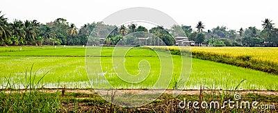 Landscape of farm