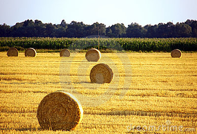 Landscape of field after harvest with bales