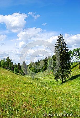 Landscape with a fir-tree