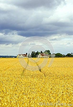 Landscape in France (Centre)