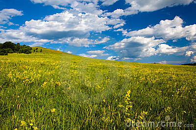 Landscape of grassland