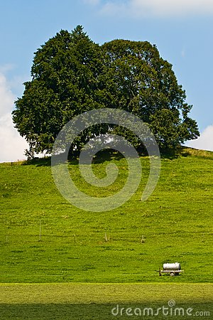 Landscape of grassland with trees and hill