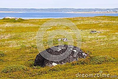Landscape of Greater Zayatsky island