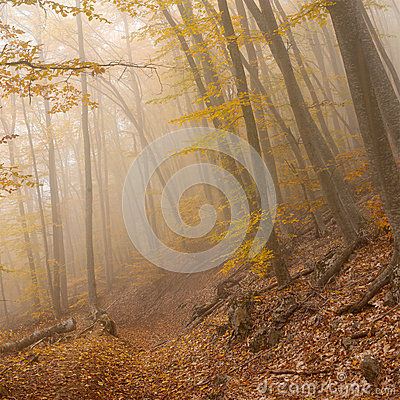Free Landscape In Wild Foggy Forest Stock Photography - 48330072
