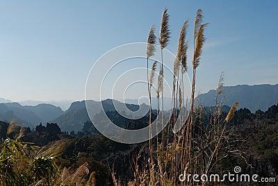 Landscape Kong Lor