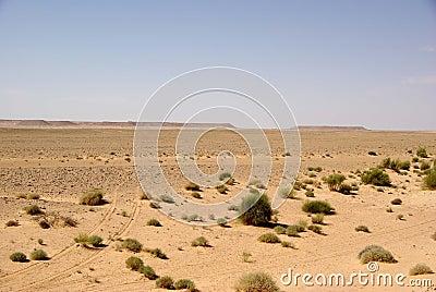 LRDG.de Libyan Landscape
