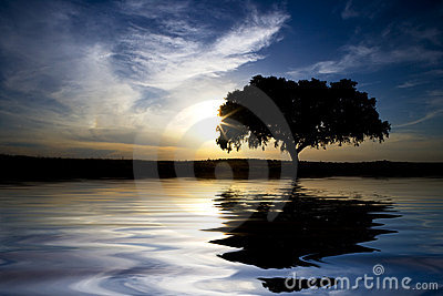 Landscape with lonely tree with water reflexion