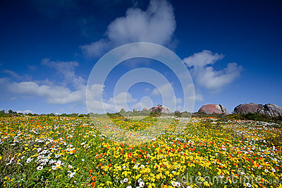 Landscape of meadow with flowers