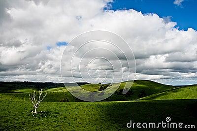 Landscape near adelaide