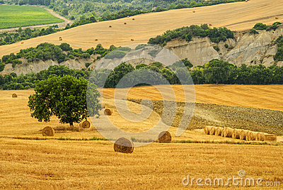 Landscape in Tuscany at summer
