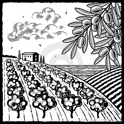 Landscape with olive grove black and white