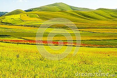 Landscape of Piano di Castelluccio
