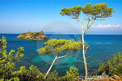 Landscape with pines on the island of the Cote d Azure