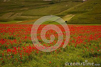 Landscape of the plain of Castelluccio in Italy