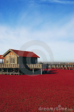 Landscape of red grass near the sea
