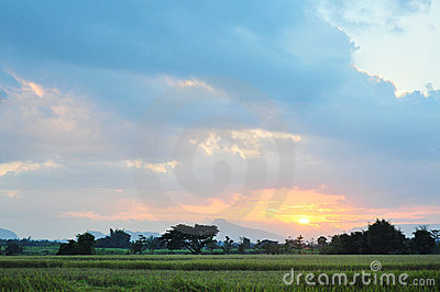 Landscape rice field  twilight