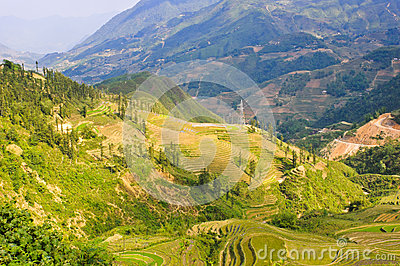 Landscape of rice terraced field
