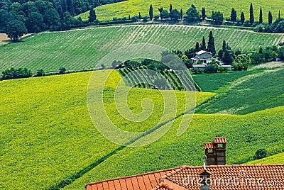 Landscape in Romagna at summer