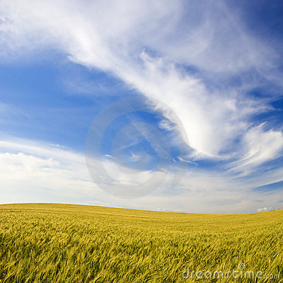 Landscape with rural field and beautiful sky