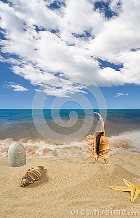 Landscape with seashell and stones on background