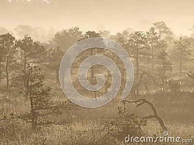Landscape of Seli Bog