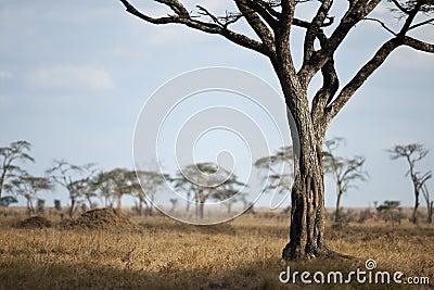 Landscape of Serengeti plain, Tanzania
