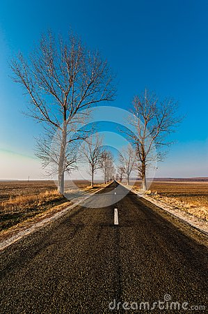 Landscape with straight empty road