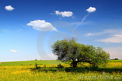 Landscape with strange tree
