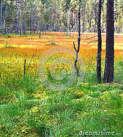 Free Landscape. Swamp. Stock Image - 44782881