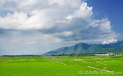 Landscape of terraced field