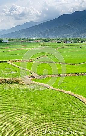 Landscape of terraced field