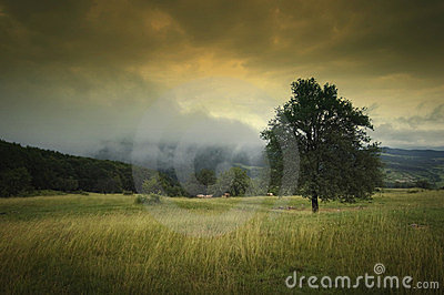 Landscape with tree and dramatic sky