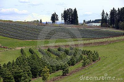 Landscape & tree farms.