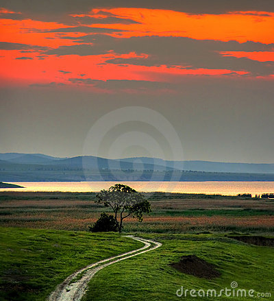 Landscape With Tree At Sunset