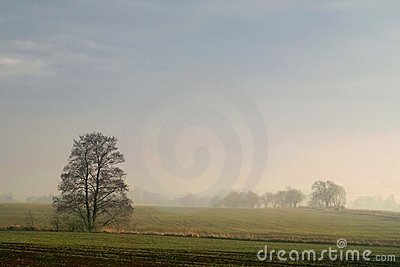 landscape with tree at sunset in winter