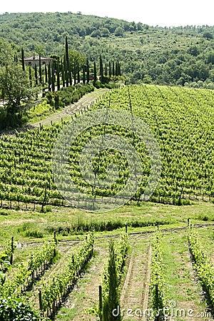 Landscape of Tuscany (Italy)