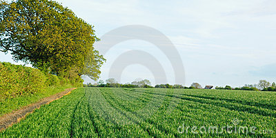 Landscape View of Crops on Farmland