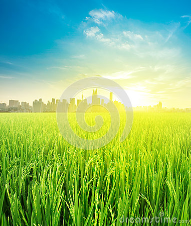 Free Landscape View Over Rice Field Plantation Farming Stock Photography - 30568982